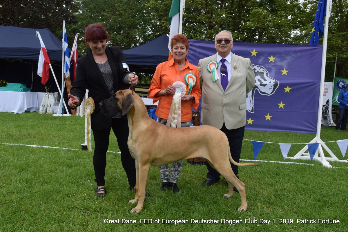 Selmalda Great Danes | News